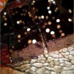 Szybki i wilgotny piernik z konfiturą z czarnej porzeczki