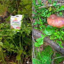 Wycieczka, małe grzybobranie i ulubiona przekąska (7)