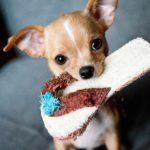 Pies i dziecko – wszystko co musisz wiedzieć o tym duecie!