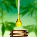 Olej konopny i inne wyroby z konopi siewnych – właściwości i zastosowanie