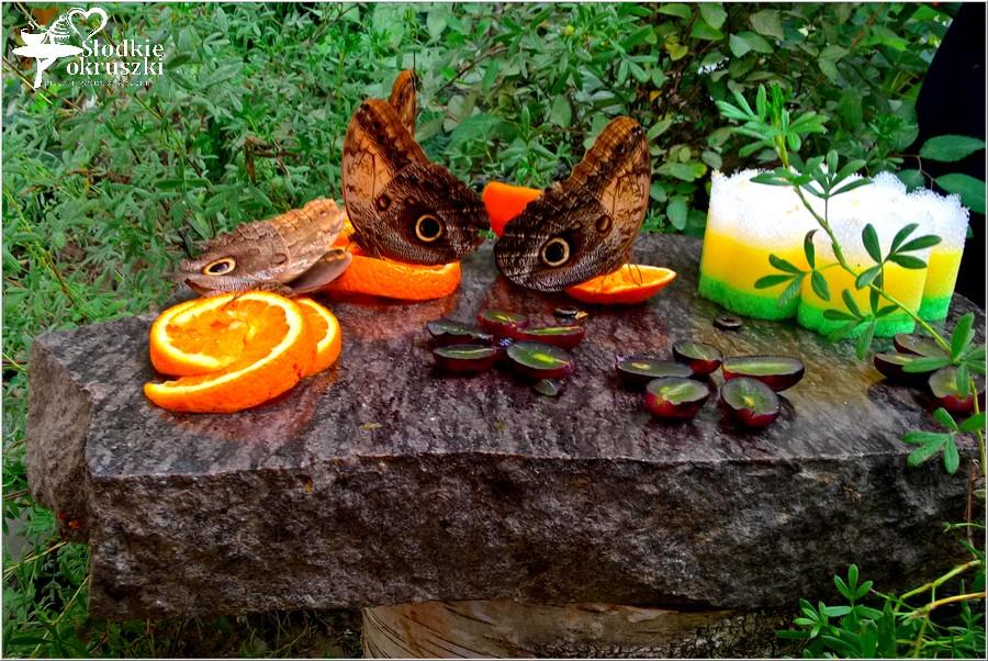 Motylarnia w Niechorzu - piękne i magiczne miejsce (1)