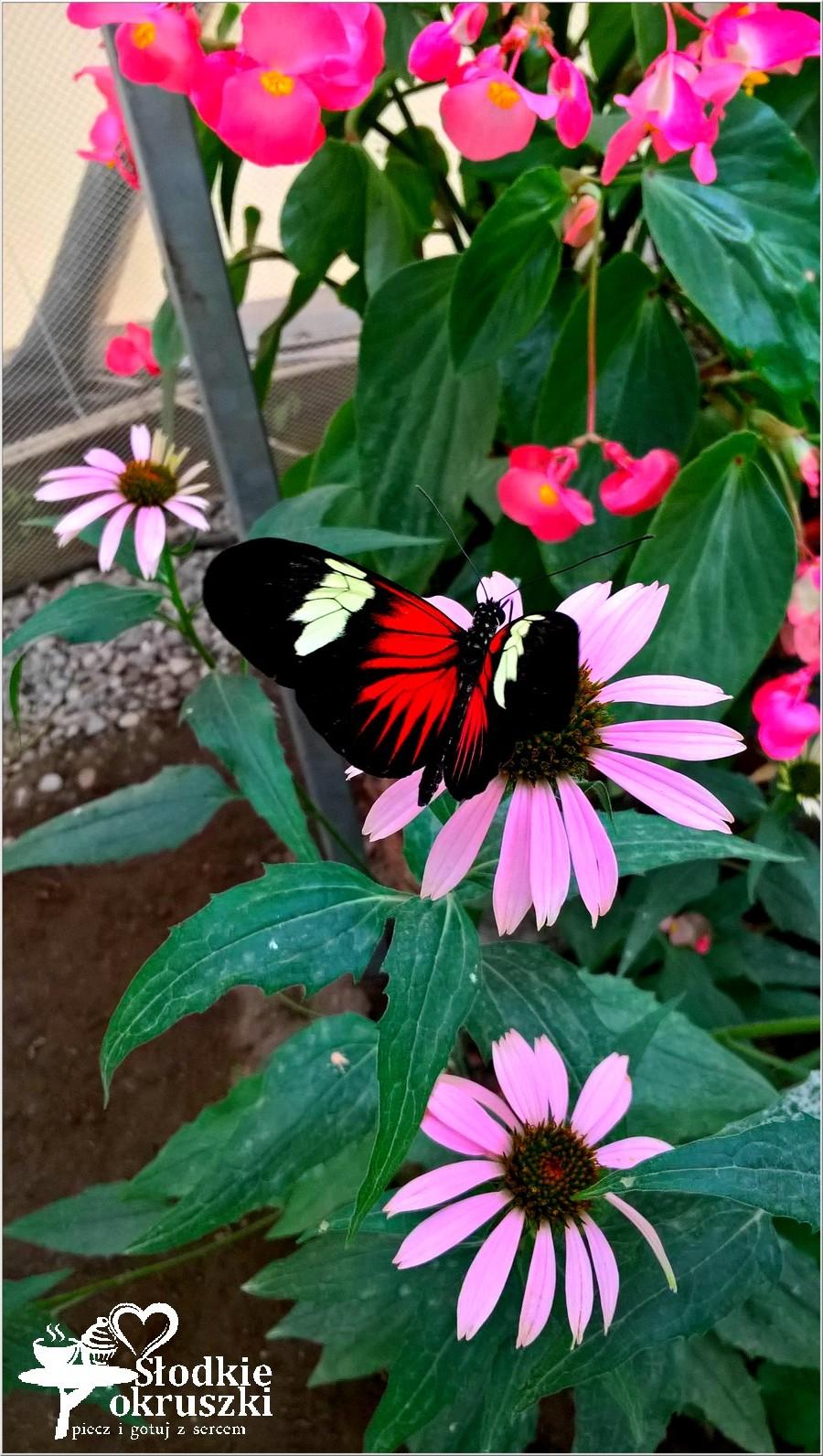 Motylarnia w Niechorzu - piękne i magiczne miejsce (2)