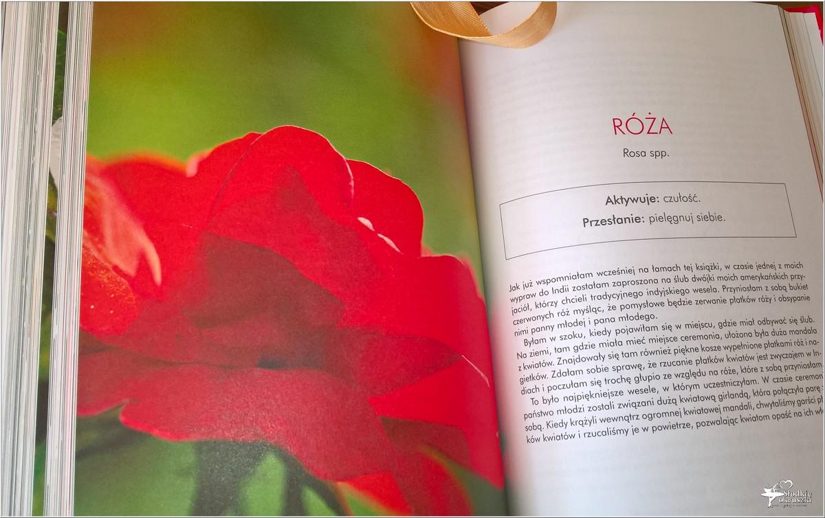 Jak wykorzystać energię kwiatów. Recenzja (3)