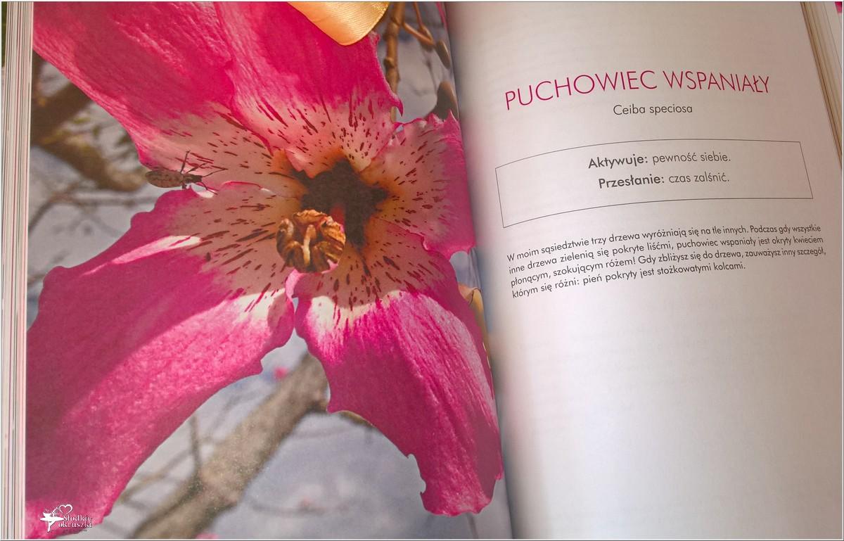 Jak wykorzystać energię kwiatów. Recenzja (4)