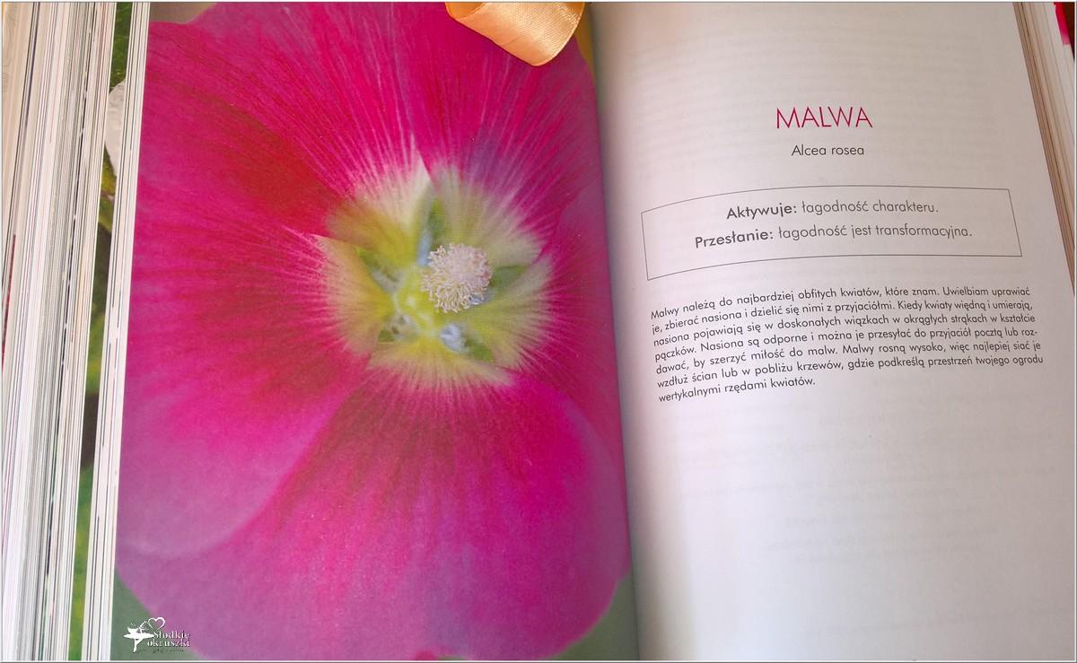 Jak wykorzystać energię kwiatów. Recenzja (5)