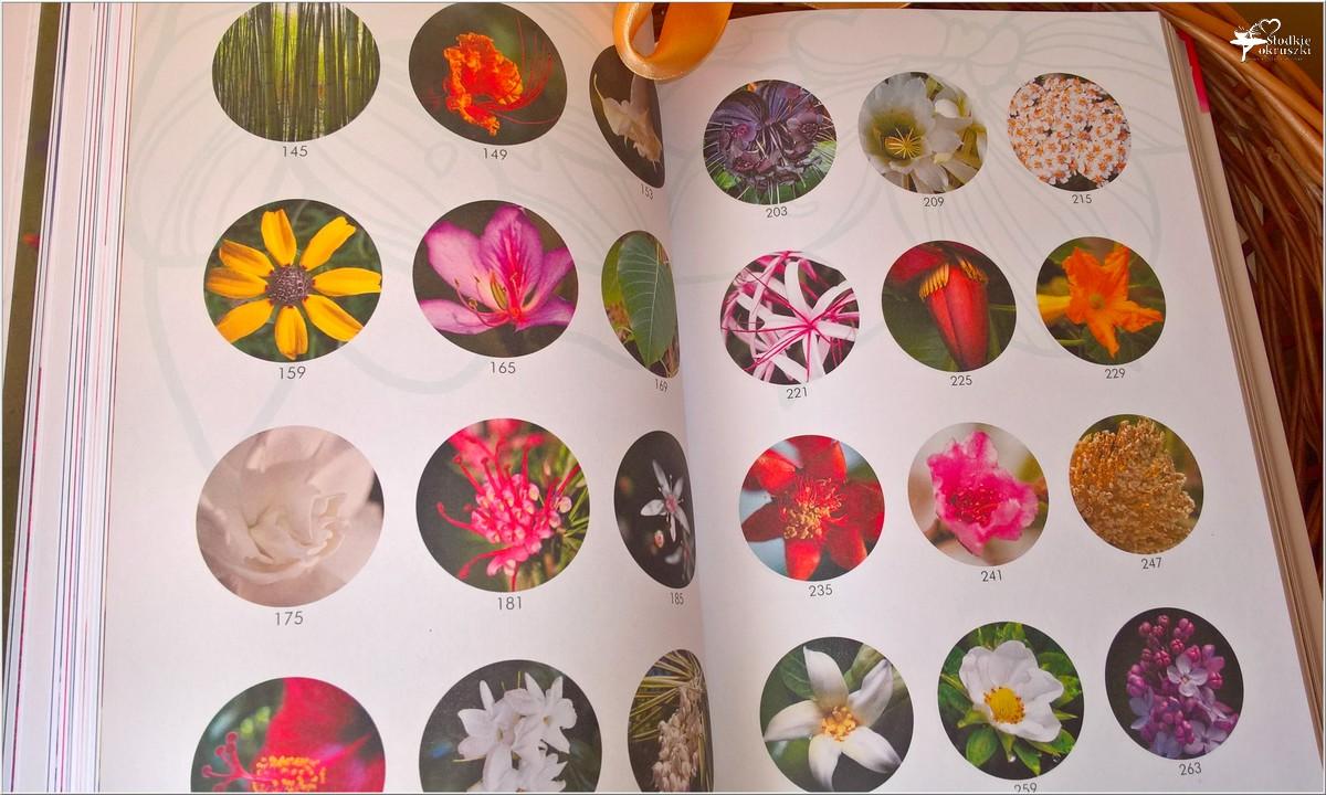 Jak wykorzystać energię kwiatów. Recenzja (7)