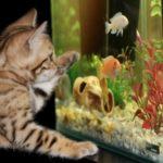 Dlaczego warto mieć w domu akwarium?
