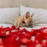 Wyjątkowe Walentynki